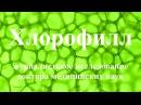 Научные исследования ХЛОРОФИЛЛА в онкологии Очищение организма от токсинов/канцерогенов и паразитов