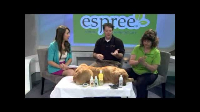 Espree Animal Products Discusses Pet Grooming on DFW Closeup