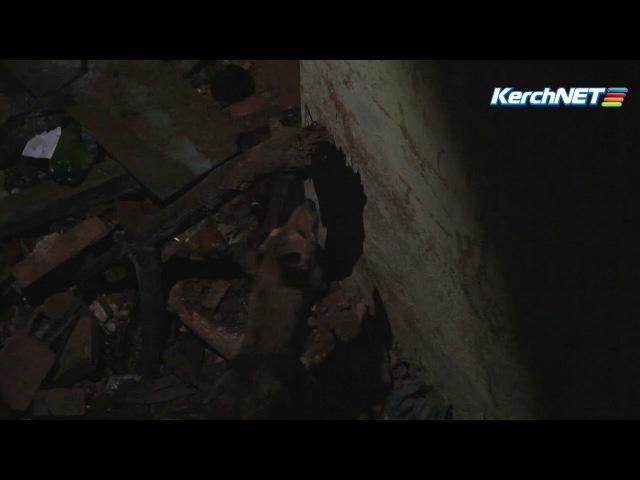 Керчь: люди своими силами пытаются спасти упавшую в яму собаку