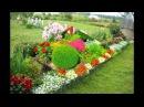 Превосходные цветы на даче у наших дачников