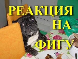 Смешной бульдог за столом. Реакция на фигу… A funny bulldog at the table. (Без рекламы)