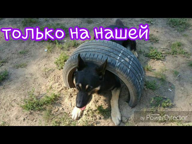 Площадка для собак. город Тюмень.