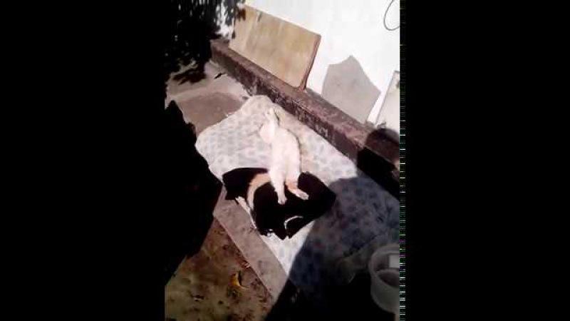 Кот прикольно спит ПРИКОЛЫ Взаимная подписка взаимные лайки СЕКС ГРУПОВОЕ МАЛОЛЕТКИ ШКОЛЬНИЦЫ В УНИФОРМЕ