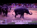 Gajah bisa selvi lucu end gokil