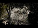 Armin Van Buuren - Mirage - Desiderium 207 feat. Susana