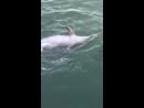 Дельфины подплыли очень близко