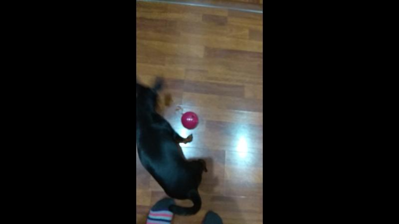 Лорри играет шариком