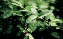 Звуки природы: лес после дождя. Отлично расслабляет и снимает нервное напряжение.