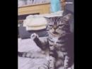 Кот ,а ты случайно не этой лаской в латке закапываешь