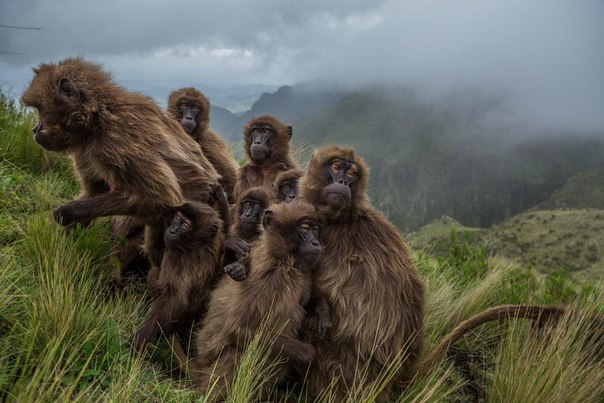 'National Geographic' Highlights Its Best Photos of 2017