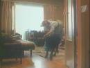Воспитание жестокости у женщин и собак (1992) Часть II