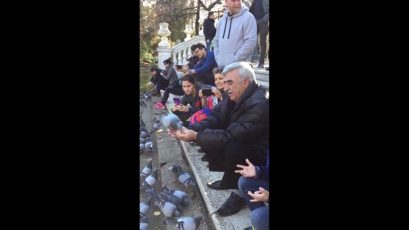 Дед и внук кормят голубей.