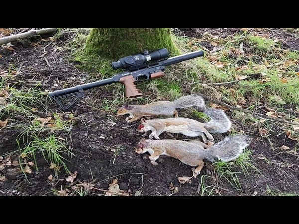 24.09.17 squirrel pest control with ATN Xsight2/edgun leshiy