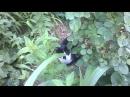 Встретили черно-белого кота