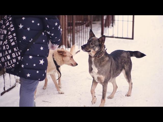 Томская зоозащитная организация СОДРУЖЕСТВО - Собаки. Доброта - это просто