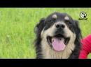 Такая порода Бурят монгольская собака