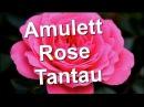 Amulett Rose Tantau