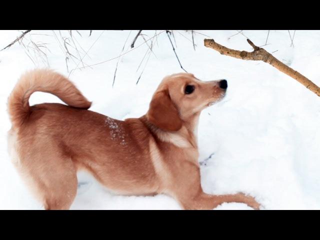 Неуловимая смешная собака Челлендж с палкой Видео для детей LizaTube