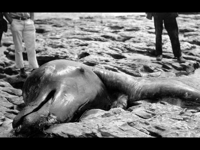4 Sea Monster Carcasses and their Explanations