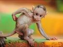Самые смешные приколы про животных Топ 5 самых прикольных видео роликов про жи ...