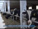 Министр оценил работу домодедовских сельхозпроизводителей