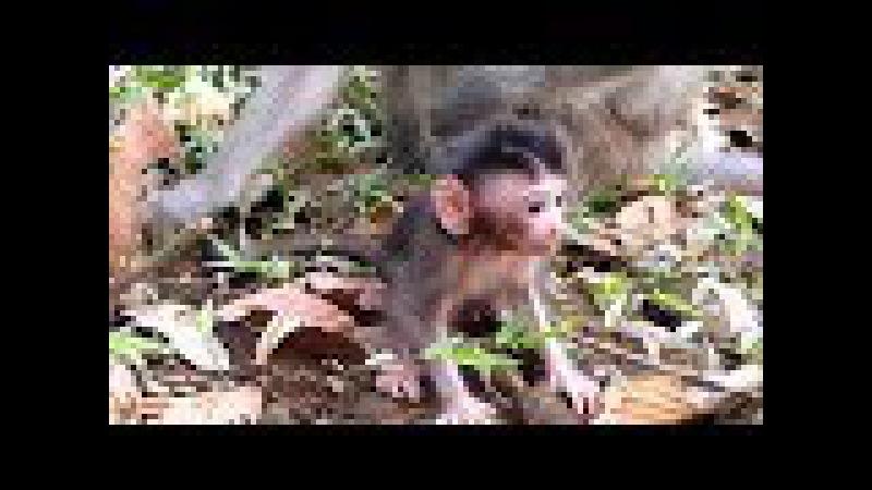 Newborn baby monkey learns to walk well | Lovely Baby Monkey Newborn | Animals Life - part 219