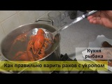 Как и сколько времени варить раков с укропом  рецепт для дома и под пиво!