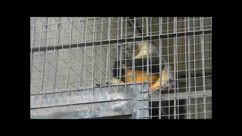мастурбирующая обезьяна в киевском зоопарке угар смотреть до конца