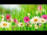 Peaceful Amazing flute music RELAXING YOUR MIND BODY AND SOUL yoga ,Meditation music 30