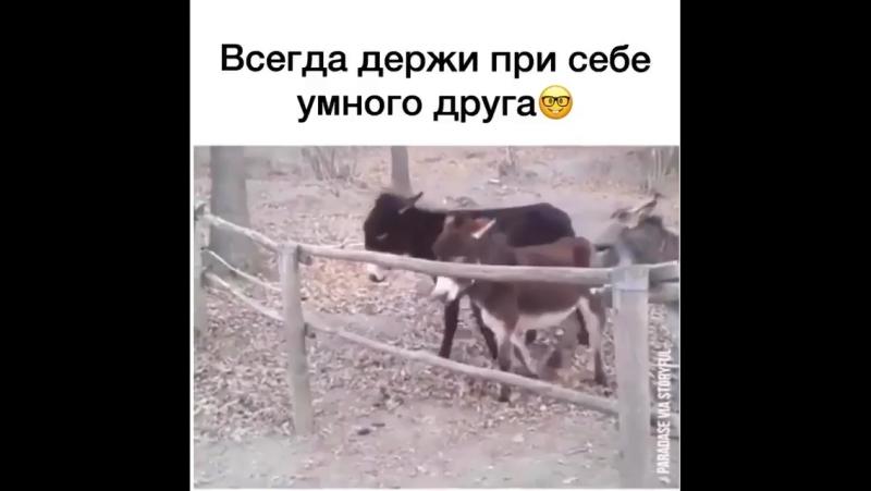 Умный ослик
