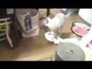 кот моет пол, ничего особенного.