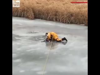 Dramatic video - Canada dog rescued