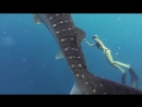 GoPro Awards_ Ocean Ramsey and a Whale Shark