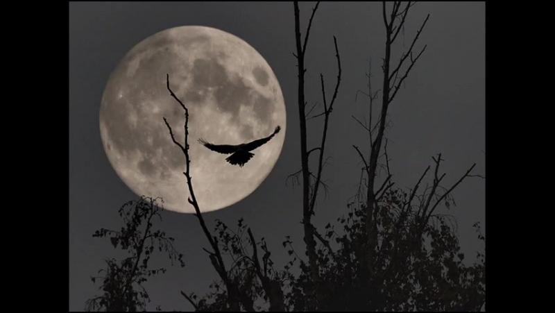 Воскресенье Ночная птица
