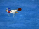 1 Дастардли и Маттли и их Летающие Машины