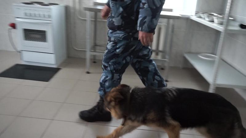 Еджина с Канских Берегов ОКП
