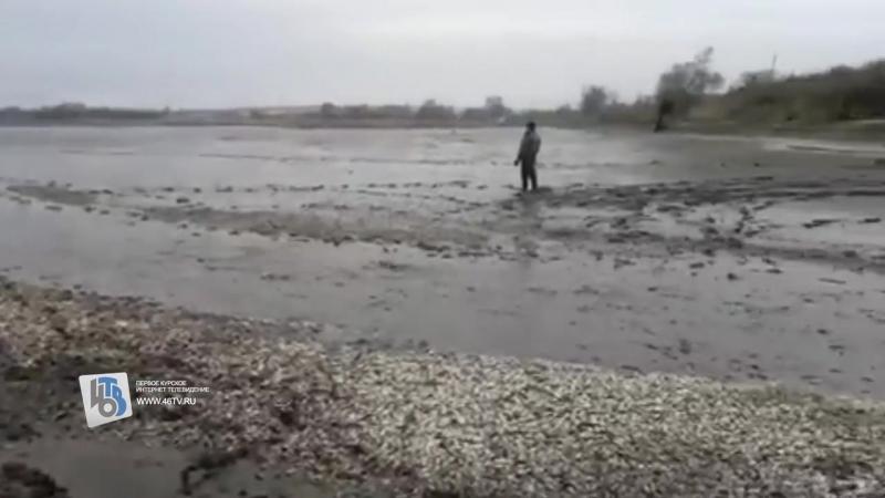 Экологический скандал на пруду под Курском и горы мертвой рыбы следователи инициировали проверку