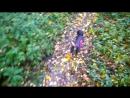 Нелегкая собачья жизнь смотреть бесплатно без смс и регистрации 18 цп в лс gjhyj