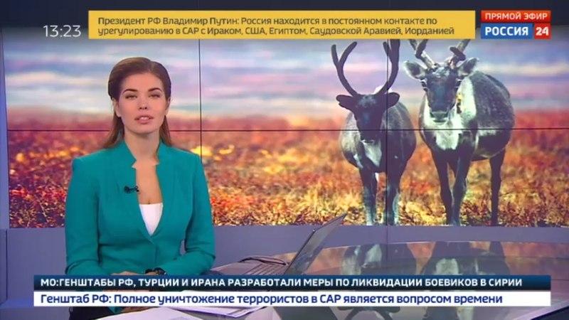 Новости на «Россия 24» • Ямальская оленина покоряет Германию