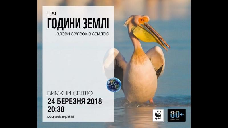 Почуй природу у Годину Землі - Рожевий пелікан