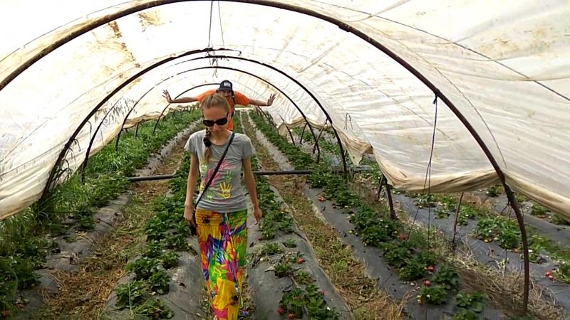 Кушаем клубнику в Турции прямо на плантации. Взаимодействуем с турками