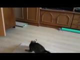 Кузя играет с интерактивной мышкой