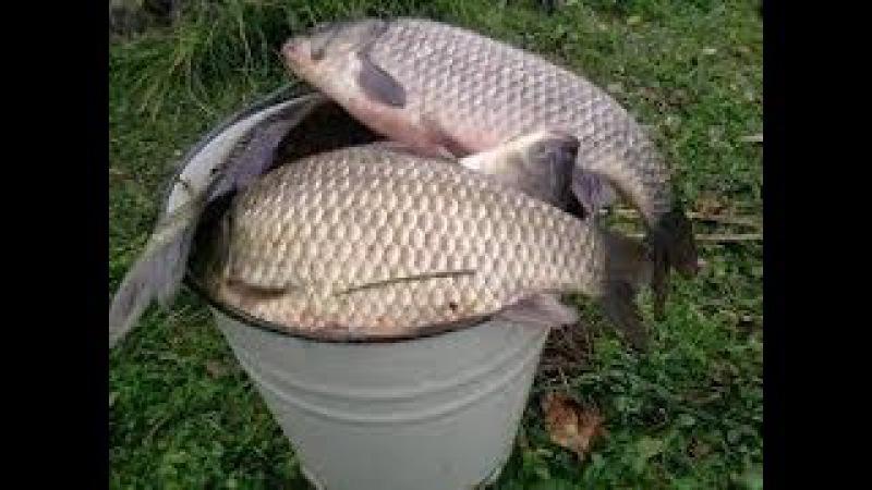 Супер рыболовная насадка ПРИЛИПАЛА. Карась,карп, теперь не проблема.
