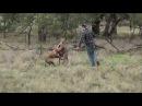 Мужчина спас собаку от кенгуру, вступив в кулачный бой