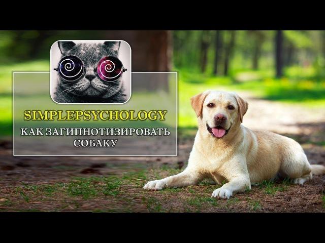 Гипноз животных. Как загипнотизировать собаку