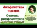 Лимфосистема человека Очистка лимфосистемы Ольга Спиридонова