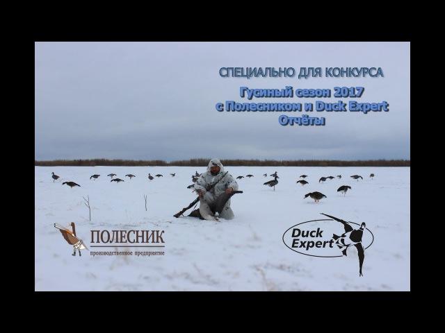 Гусиный сезон 2017 c Полесником и Duck Expert Отчеты