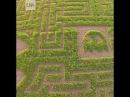 Кукурузное поле в виде лабиринта из Pac Man