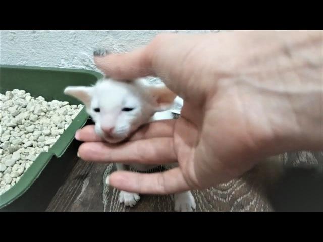 Приколы 2017 про животных Самые Смешные и Милые Животные Собаки Щенки и Коты Котят...