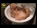 Приколы с кошками и котами 1. Подборка смешных и интересных видео с котиками и ко...